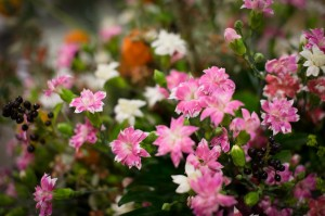 Najaarsevent_Plantion_2014_64