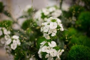 Najaarsevent_Plantion_2014_66
